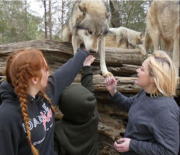 AE Family with Wolves